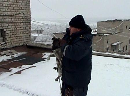 В Первомайске спасатели сняли собаку с козырька балкона на 9 этаже (видео, фото)
