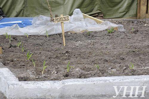 В Киеве на Майдане активисты уже засадили огород и планируют завести кур и свиней (фото)
